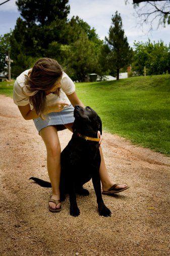 Aslında erkekler, şirin mi şirin ama bir o kadar da ele avuca sığmayan, yaramaz köpek yavrularıa benzerler. Eğitimleri de pek kolay olmaz ama üstesinden gelindiğinde de, ödülü sizi Oscar heykelciğinden daha fazla mutlu edebilir. Öyleyse, hazırsanız, derslerimize başlayabiliriz, ilk başta dersler, sevgilinizden çok size zor gelecektir ama ne demişler; sabreden derviş, muradına ermiş.